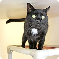 Adopt A Pet :: Scrappy - Harrisonburg, VA