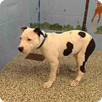 Adopt A Pet :: URGENT on 10/25 SAN BERNARDINO - San Bernardino, CA
