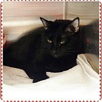 Adopt A Pet :: LULUBELL see also IZABELL - Marietta, GA