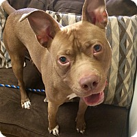 Adopt A Pet :: Nae Nae in CT - Manchester, CT