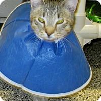 Adopt A Pet :: Wonky - Georgetown, TX