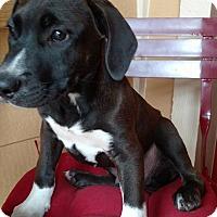 Adopt A Pet :: Cody - Tampa, FL
