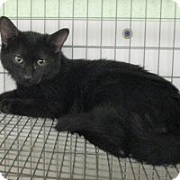 Adopt A Pet :: Romeo - Reeds Spring, MO