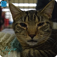 Adopt A Pet :: Jasper - Washington, PA