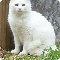 Adopt A Pet :: Endora - Ennis, TX