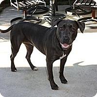Adopt A Pet :: Doja - San Diego, CA