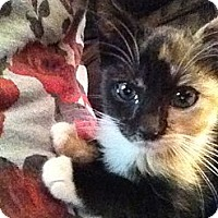 Adopt A Pet :: Amanda - East Hanover, NJ