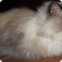 Adopt A Pet :: Antonio - Ennis, TX