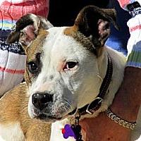 Adopt A Pet :: CANDY - Phoenix, AZ