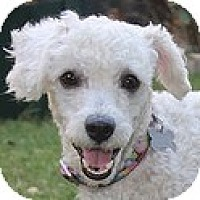 Adopt A Pet :: Vivie - La Costa, CA