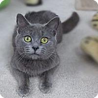 Adopt A Pet :: Whisper - Richmond, VA