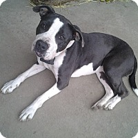 Adopt A Pet :: BINDI (Adoption Pending) - Upper Sandusky, OH
