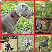 Adopt A Pet :: RANGER - Davenport, FL