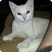 Adopt A Pet :: Bandy - brewerton, NY