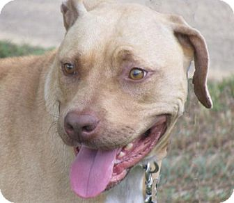 American Bulldog Mix Dog for adoption in Oxford, Mississippi - Emily - Foster Care