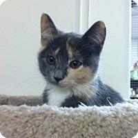 Adopt A Pet :: Juniata - Trevose, PA