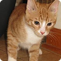 Adopt A Pet :: Napolean - Bedford, VA