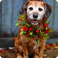 Adopt A Pet :: Sandy the Bearded Lady - Baton Rouge, LA