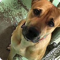 Adopt A Pet :: JJ - Gadsden, AL