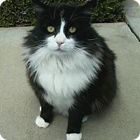 Adopt A Pet :: KENNIE - Brea, CA
