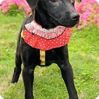 Adopt A Pet :: Delia-Dong - Seattle, WA
