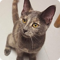 Adopt A Pet :: BISCUIT - Tiffin, OH