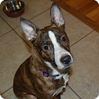 Adopt A Pet :: Joey - Raritan, NJ