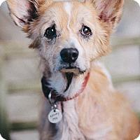 Adopt A Pet :: Kori - Portland, OR