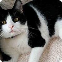 Adopt A Pet :: RUMBLE - Canfield, OH