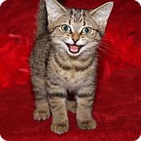 Adopt A Pet :: Victoria - Marietta, OH