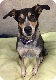 German Shepherd Dog Mix Dog for adoption in Willmar, Minnesota - Ramona