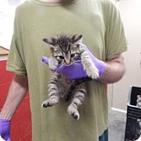 Adopt A Pet :: Amelia - Pikeville, KY