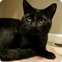 Adopt A Pet :: Binx - Reisterstown, MD