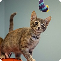 Adopt A Pet :: Autumn - Dallas, TX