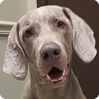 Adopt A Pet :: Rocco - Birmingham, AL
