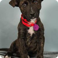 Adopt A Pet :: Shaggy - Berkeley Heights, NJ