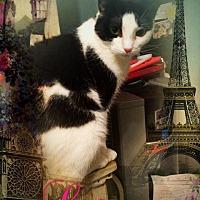 Adopt A Pet :: Linx - Bedford Hills, NY