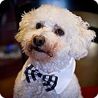 Adopt A Pet :: Mozart - Orange, CA
