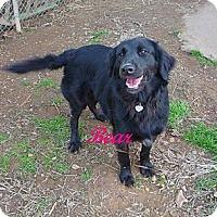 Adopt A Pet :: Bear-Bear - Linden, TN