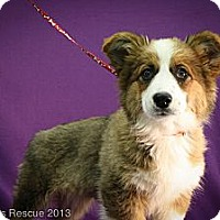 Adopt A Pet :: Alpine - Broomfield, CO
