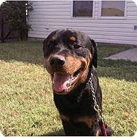 Adopt A Pet :: Rodney - Arlington, TX