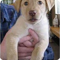 Adopt A Pet :: Niko - Cumming, GA