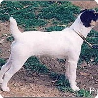 Adopt A Pet :: PIPPIN - Scottsdale, AZ