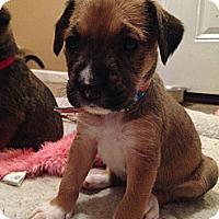 Adopt A Pet :: Savvy - Russellville, KY