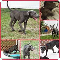 Adopt A Pet :: DOBBY - Davenport, FL