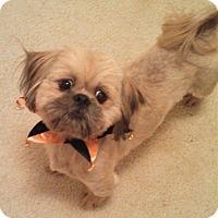 Adopt A Pet :: Charles - Homewood, AL