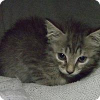 Adopt A Pet :: Tany - Vansant, VA
