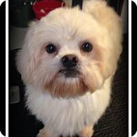 Adopt A Pet :: Pol - Indian Trail, NC