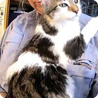 Adopt A Pet :: Trevor and Tommy - Davis, CA