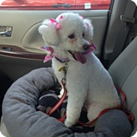 Adopt A Pet :: ROSEY - Melbourne, FL